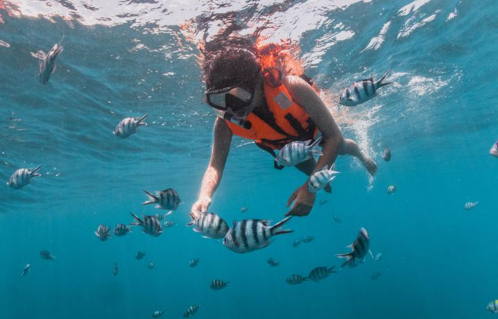 Recreation - Snorkelling